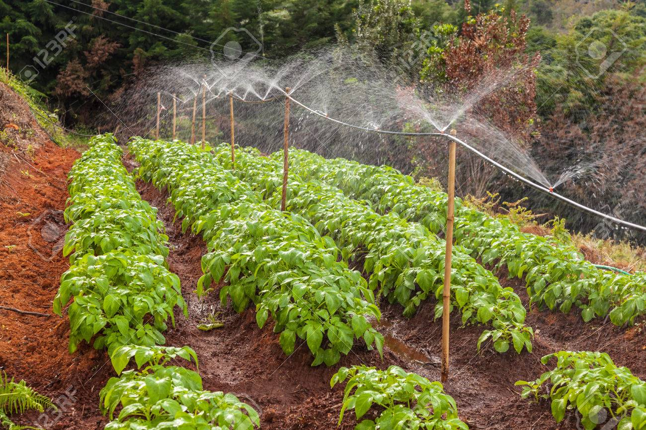 Best Irrigation System For Vegetable Garden